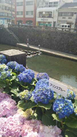 "眼鏡橋(""⌒∇⌒"")"